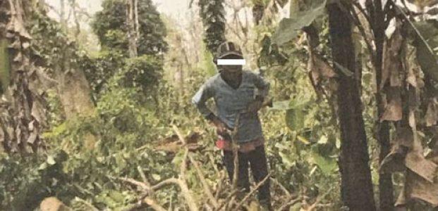 Dinas Pertanian Polisikan Penebangan Tanaman Kopi di Hortipark