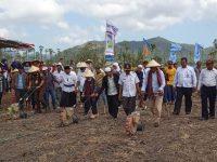 Tumpangsari Genjot Produksi Jagung dan Kedelai