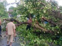 Cuaca Ekstrim, Puluhan Pohon di Kota Praya Tumbang